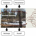 How forest thinning affects runoff and recharge